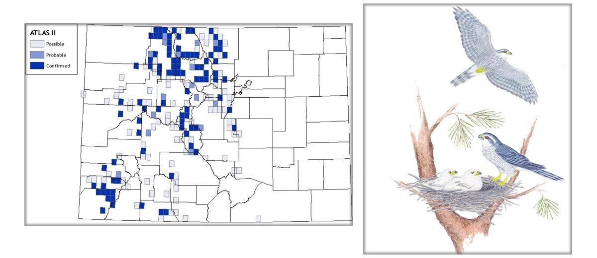 Welcome to Colorado Breeding Bird Atlas II